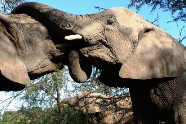 eine herde elefanten in der Savanne